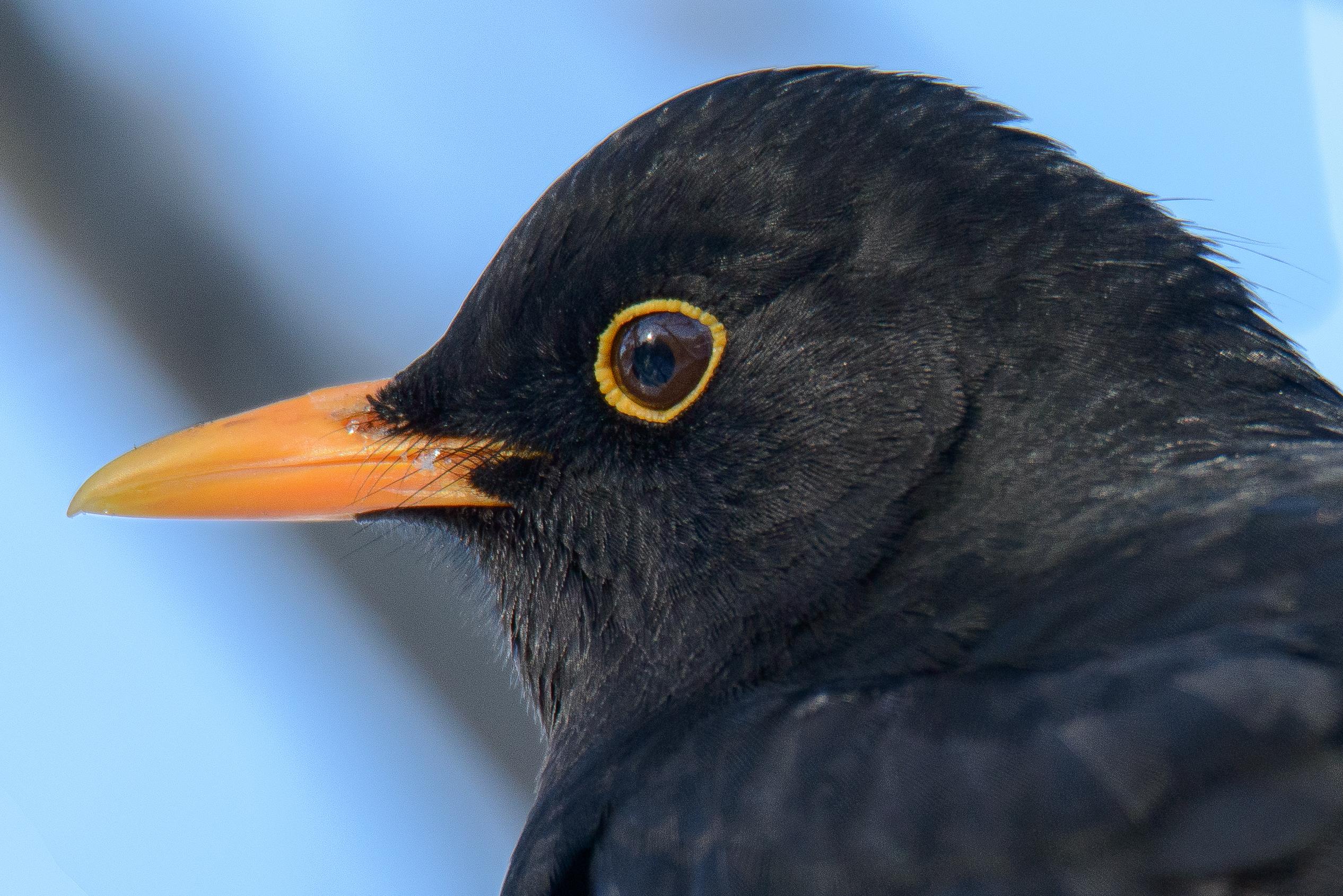 Öringefåglar_2021-02-11_1052_21